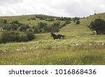 montenegro north travel love   Shutterstock . vector #1016868436