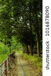 the green path | Shutterstock . vector #1016878090