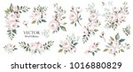 set of floral branch. flower... | Shutterstock .eps vector #1016880829