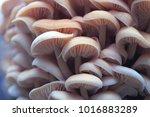 Wood Mushrooms. Macro Yellow...