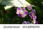 lighting to orchids bouquet | Shutterstock . vector #1016890450