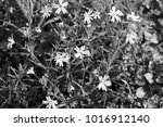 small white flowers in the... | Shutterstock . vector #1016912140