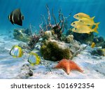 Underwater Tropical Fish With ...
