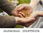 homemade wedding rings. wedding ... | Shutterstock . vector #1016950156