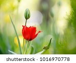 amazing nature concept of red... | Shutterstock . vector #1016970778