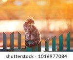 Young Beautiful Cat Sits In Th...