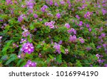 purple flowers with green leaves | Shutterstock . vector #1016994190