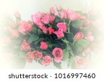 pink roses flowers bouquet with ... | Shutterstock . vector #1016997460