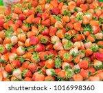 red strawberries background.   Shutterstock . vector #1016998360