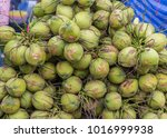 fresh coconuts for sale.   Shutterstock . vector #1016999938