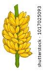 Banana 2   Bunch Of Ripe Banana