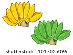 banana 1   ripe and unripe... | Shutterstock .eps vector #1017025096