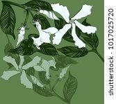 jasmine   flowers  buds  leaves.... | Shutterstock .eps vector #1017025720