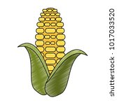 corn food isolated | Shutterstock .eps vector #1017033520