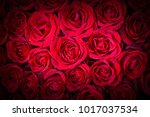 natural red roses background | Shutterstock . vector #1017037534