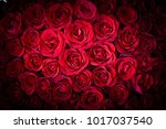 natural red roses background | Shutterstock . vector #1017037540
