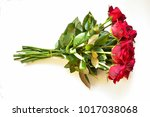 red rose. isolated with a white ... | Shutterstock . vector #1017038068