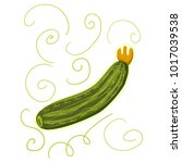 zucchini. object isolated on...   Shutterstock .eps vector #1017039538