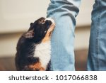 Stock photo domestic life with pet cat welcome his owner young man at home 1017066838