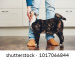 Stock photo domestic life with pet cat welcome his owner young man at home 1017066844