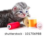 Kitten plays with sewing bobbins - isolated on white background - stock photo
