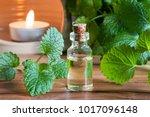 a bottle of melissa  lemon balm ...   Shutterstock . vector #1017096148