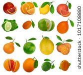 set of citrus fruits isolated | Shutterstock . vector #1017108880