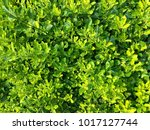 fresh green plants background | Shutterstock . vector #1017127744