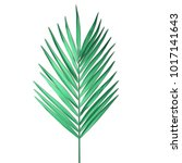 tropical palm leaf isolated on... | Shutterstock .eps vector #1017141643