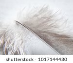 feathers. plumage. plumage of... | Shutterstock . vector #1017144430