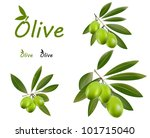 set of green olive branches and ... | Shutterstock .eps vector #101715040