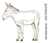 vector antique engraving... | Shutterstock .eps vector #1017196159