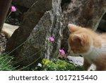 cat is curious in the garden. | Shutterstock . vector #1017215440