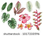 watercolor drawing of tropical... | Shutterstock . vector #1017233596