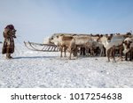 the extreme north  yamal  ... | Shutterstock . vector #1017254638