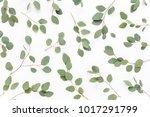 eucalyptus branches pattern.... | Shutterstock . vector #1017291799