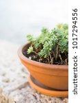 succulent in the garden home   Shutterstock . vector #1017294556