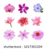 Set Of Tender Pink Flowers...
