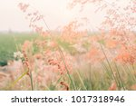Stock photo field of flowers pink flowers field background flowers background 1017318946