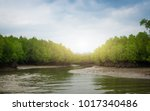 Tropical Mangrove Forest Under...