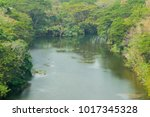 deep swamps  surrounded by... | Shutterstock . vector #1017345328