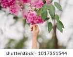 hand holding pink flower tree...   Shutterstock . vector #1017351544