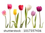 set of seven different color... | Shutterstock . vector #1017357436