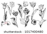 a collection of tulip's... | Shutterstock .eps vector #1017400480