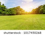 green tree and green grass in... | Shutterstock . vector #1017450268