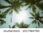 palm trees in the jungle.... | Shutterstock . vector #1017484783