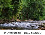 rainforest creek near babinda ... | Shutterstock . vector #1017522010