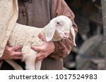 a small lamb in the shepherd's... | Shutterstock . vector #1017524983