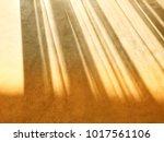 shadow of soft sunlight through ...   Shutterstock . vector #1017561106