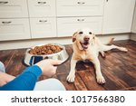 domestic life with pet. feeding ... | Shutterstock . vector #1017566380